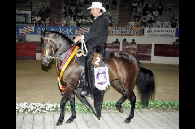 """Gran Campeona paso Fino """"Azúcar Morena"""""""