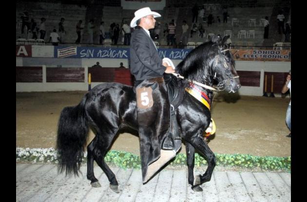 "Gran Campeón Paso Fino ""Sendero Luminoso"""