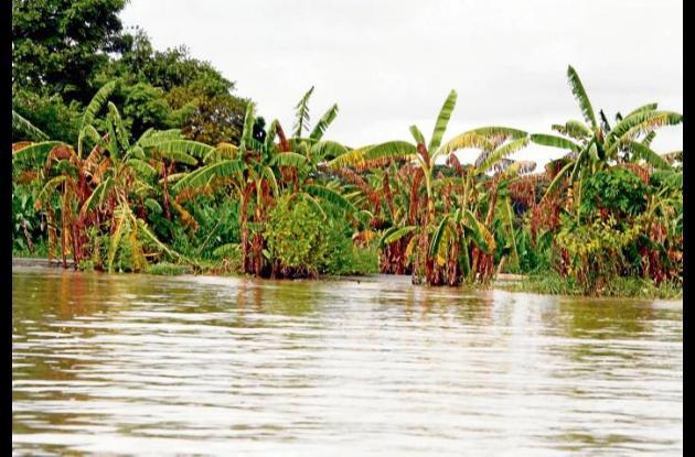 Preocupación en los gremios agrícolas por inminente riesgo de inundaciones