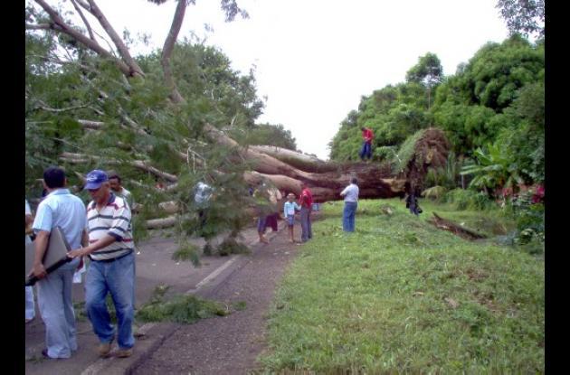 caída de un árbol gigante