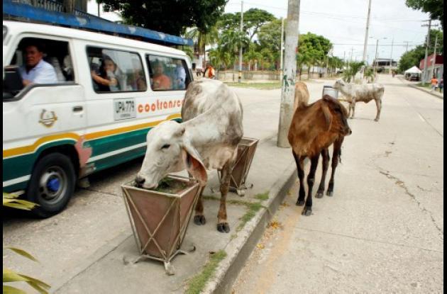 Animales en la vía
