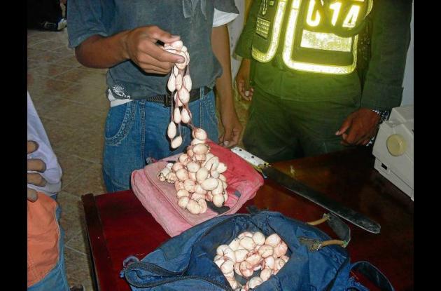 En los últimos días ha aumentado el decomiso de huevos de iguana.