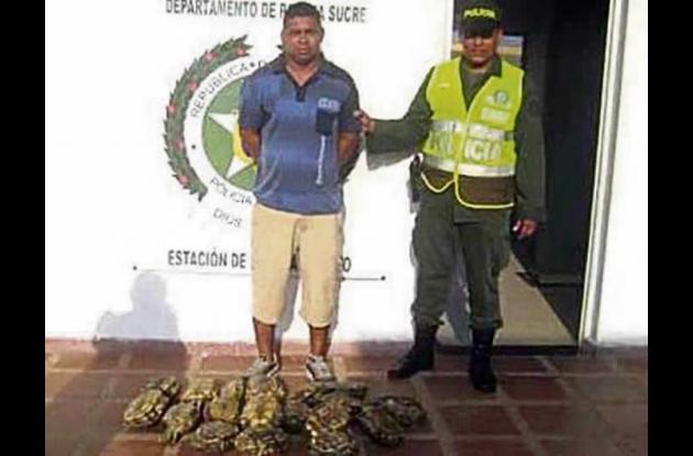 18 icoteas vivas incautadas en Caimito.