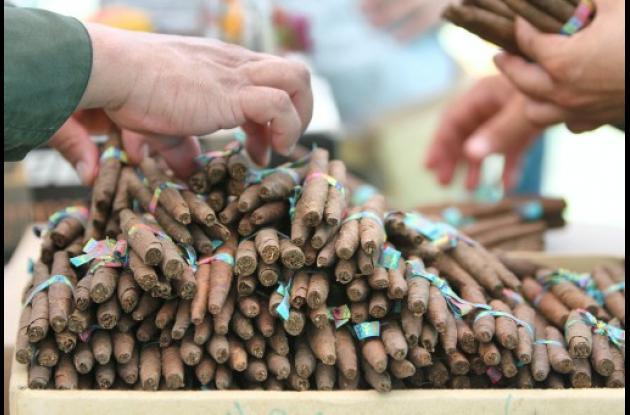 En El Salado se desarrolla un proyecto piloto de cultivo de tabaco tipo Burley.