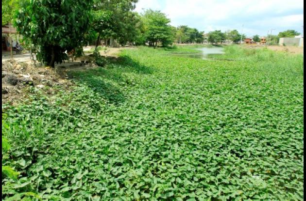 Tarrulla afecta al caño Limón, en alrededores de Las Palmeras.