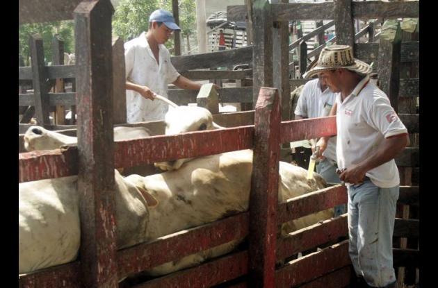 El ICA toma medidas para transporte de animales por vías nacionales.