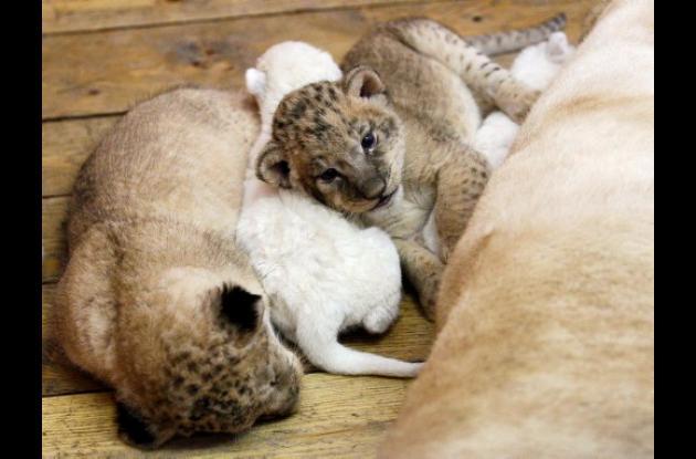 leona blanca
