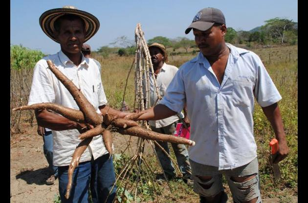 Mediante la siembra y transformación de yuca y batata, los emprendedores capacit