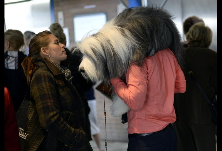 'Westminster Kennel Club Dog Show