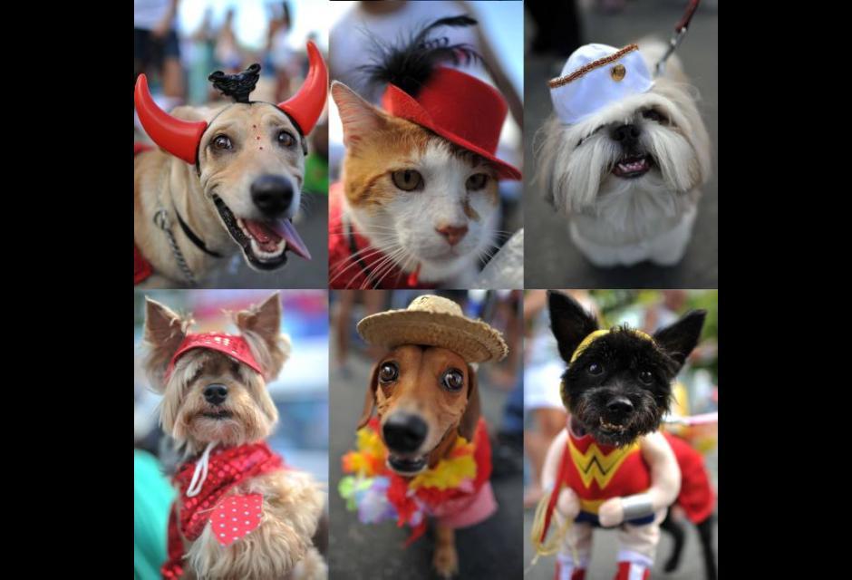 Carnaval de animales: otro espectáculo de Río de Janeiro