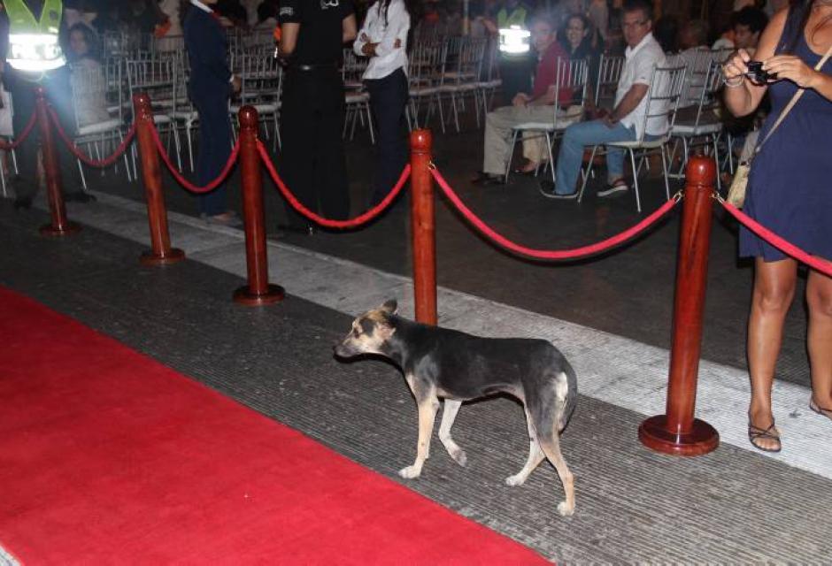 Este perro fue el protagonista inesperado en la alfombra roja