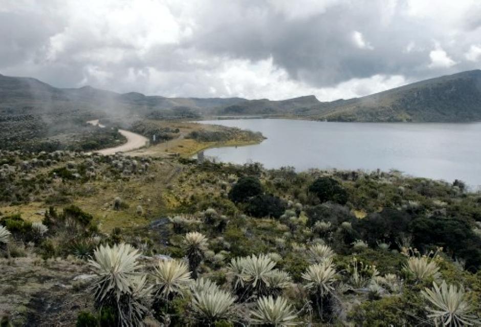 Páramo de Santurbán