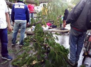 Muertos por caída de un árbol