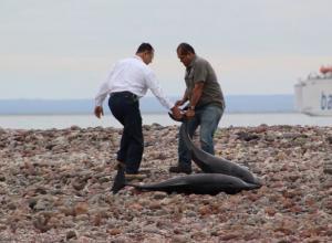 Foto de ilustración sobre hallazgo de delfines muertos.