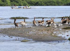 Aves en Ciénaga de Las Quintas