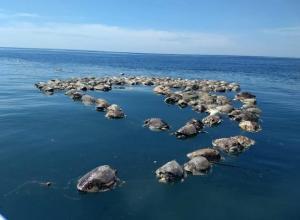Tortugas muertas en el mar